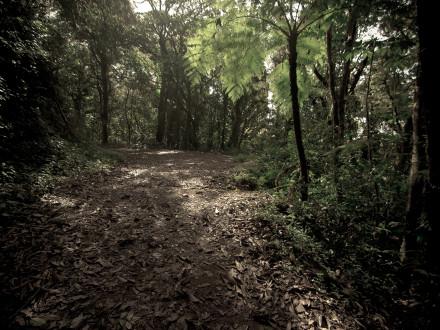 Clound-Forest